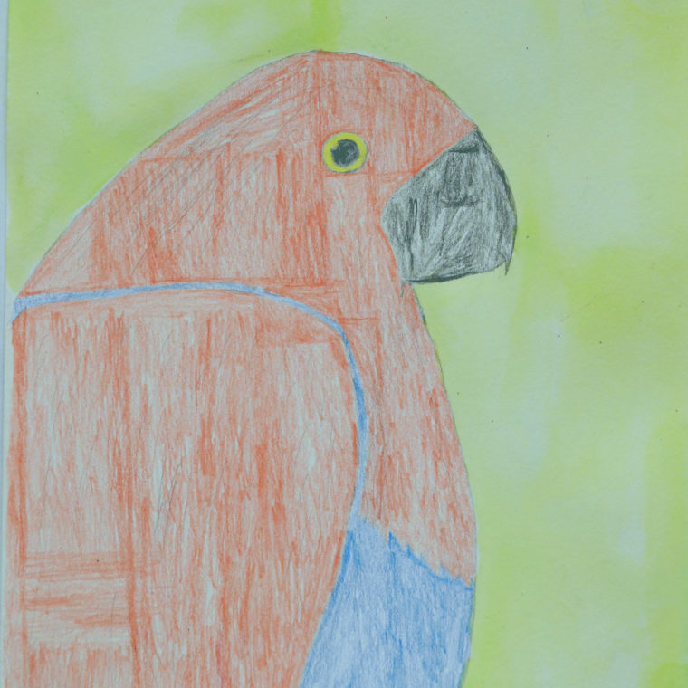 Parrot by Parker Stallworth